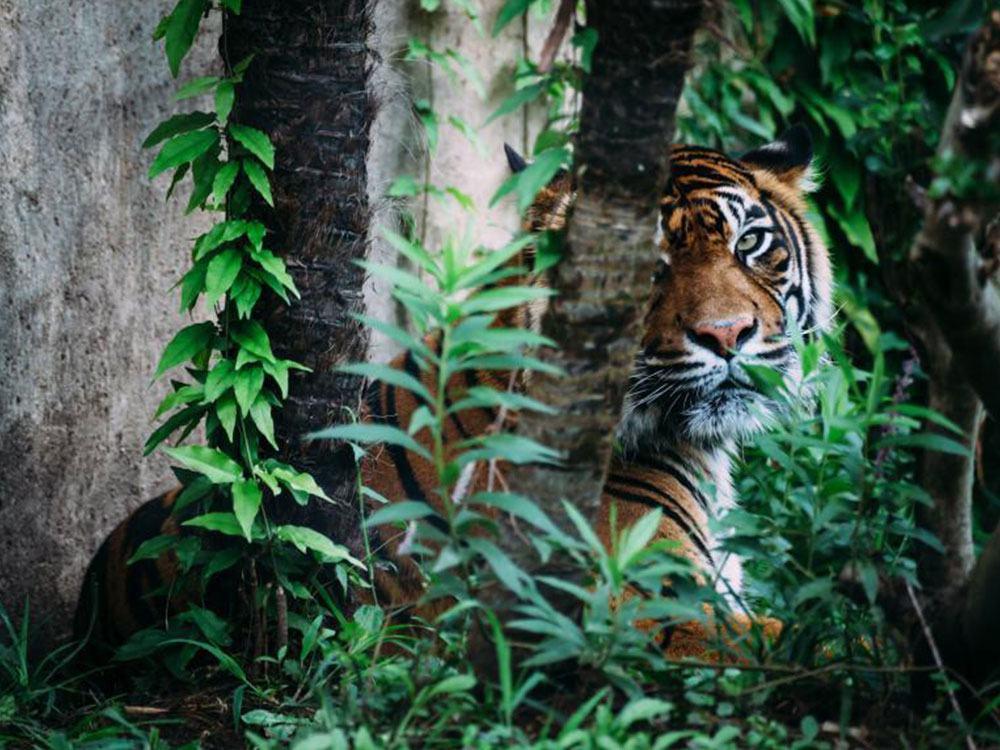 Jungle Highlights